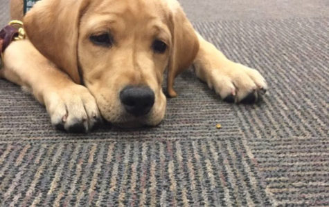 The Truth About Guide Dogs