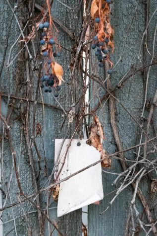 Notes to lost loved ones that have been tied to branches of the Sharing Place garden